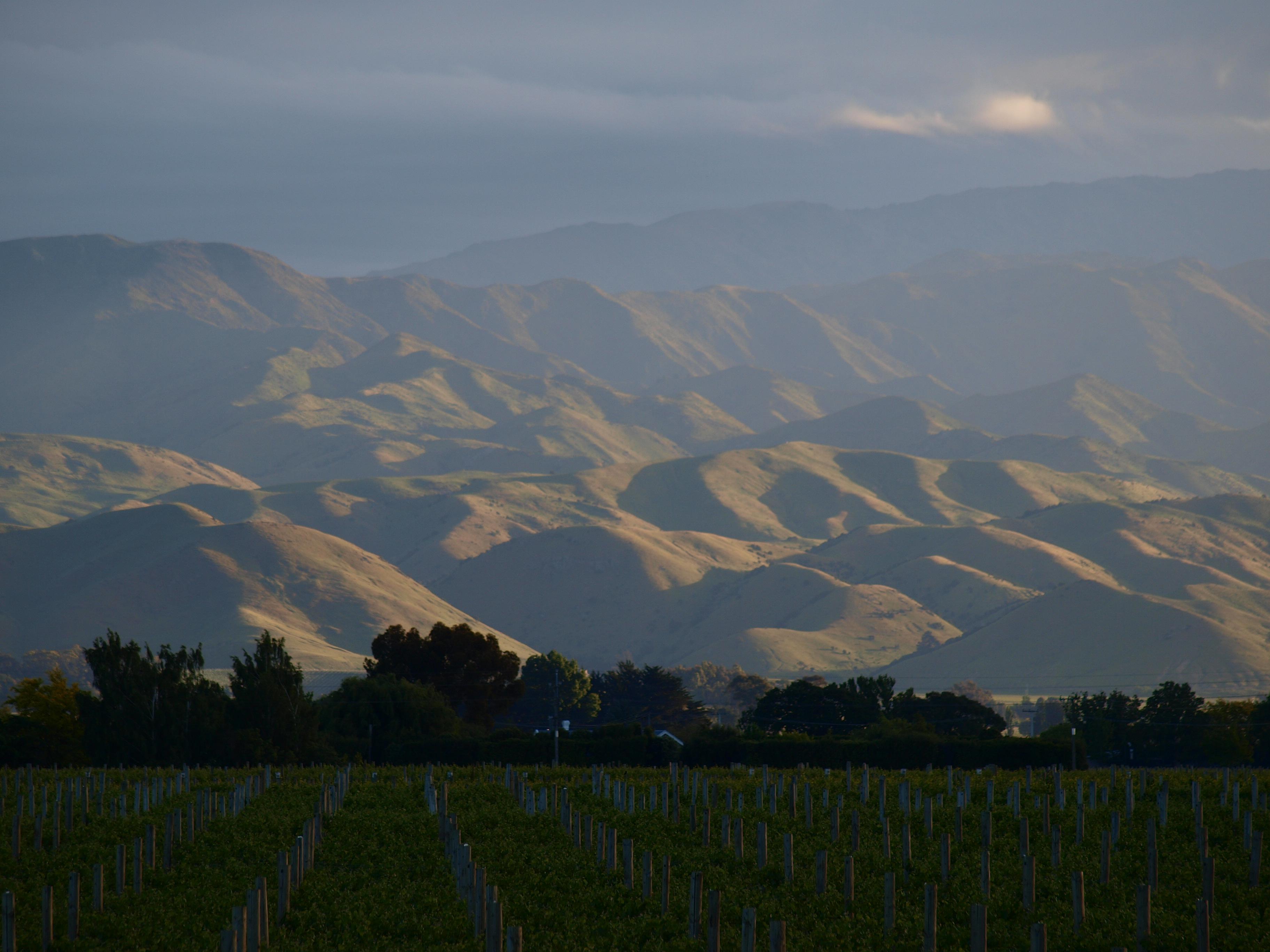 Satumaista viiniä Uudesta-Seelannista